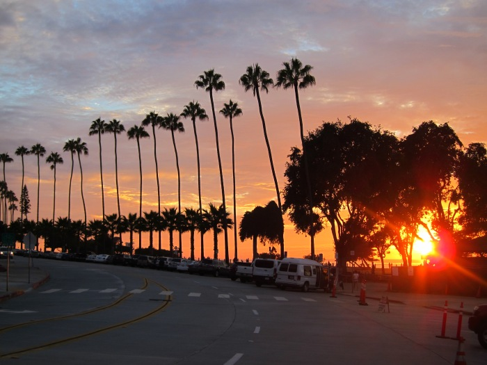 My photographic eye caught this. Palm trees everywhere. A sign you're in Cali.