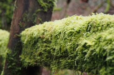 Moss everywhere! Amazing!